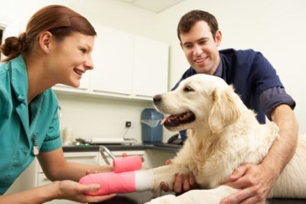 Best Glucosamine Chondroitin for Dogs