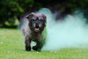 image of running dog for msm for dogs dosage