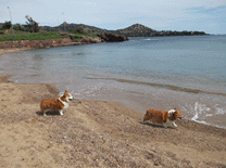 france-cap-esterel-dogs-beach-1