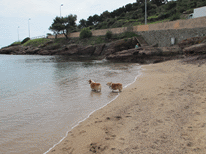 france-cap-esterel-dogs-beach-3