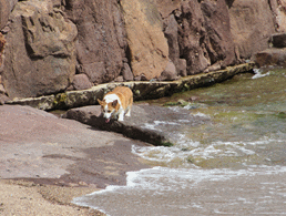 france-cap-esterel-dogs-beach-4