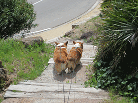 france-cap-esterel-dogs-beach-stairs