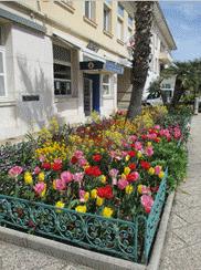france-cap-esterel-flowers-2