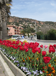 france-cap-esterel-flowers-3